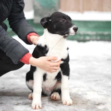 Оливер и Один - Собаки в добрые руки