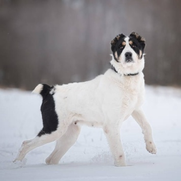 Юкки - Собаки в добрые руки