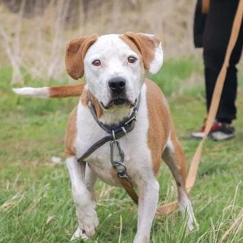 Ивакс - Собаки в добрые руки