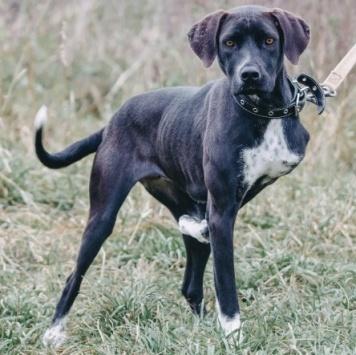 Дарсела - Собаки в добрые руки