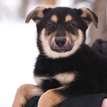 Элма - Собаки в добрые руки