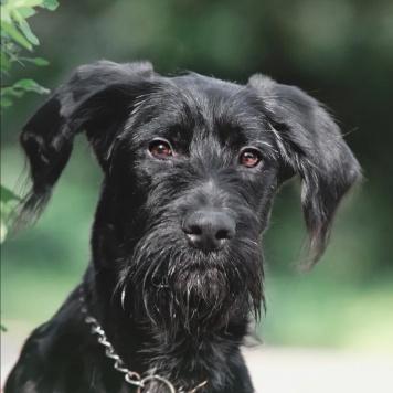 Айми - Собаки в добрые руки