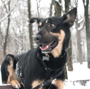Шеги - Собаки в добрые руки