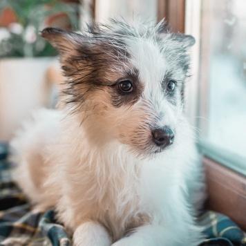 Зефирки - Собаки в добрые руки