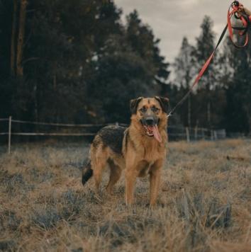 Дэил - Собаки в добрые руки