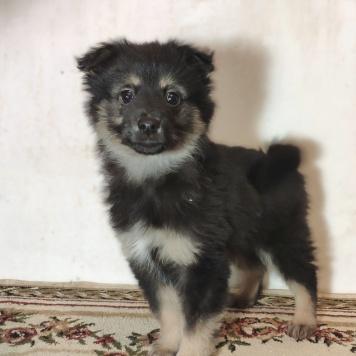 Щенок Фунтик - Собаки в добрые руки