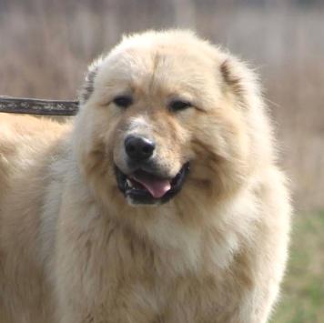 Нури - Собаки в добрые руки