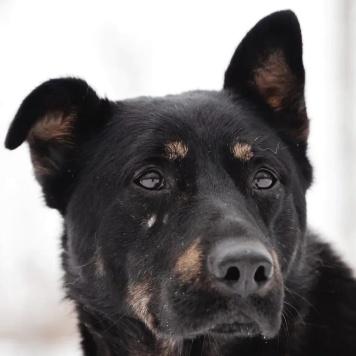 Деймос - Собаки в добрые руки
