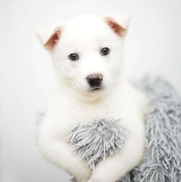 Три Малявки - Собаки в добрые руки