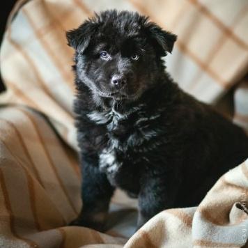Ёжик - Собаки в добрые руки