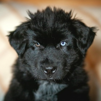Трезор - Собаки в добрые руки