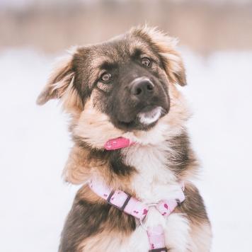 Мятлик - Собаки в добрые руки
