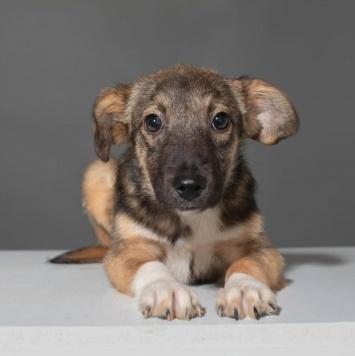 Чак - Собаки в добрые руки