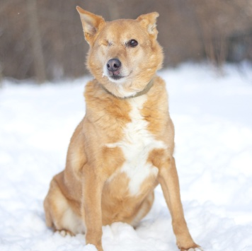 Нелли - Собаки в добрые руки