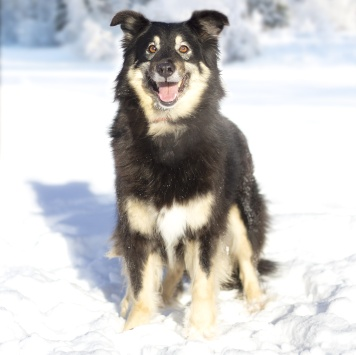 Лекси - Собаки в добрые руки