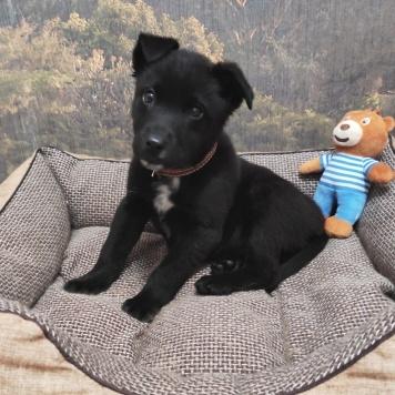Рикки - Собаки в добрые руки