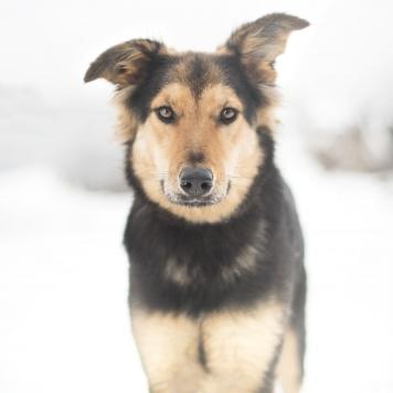 Касия - Собаки в добрые руки