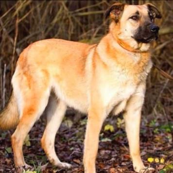 Люся - Люсиночка - Собаки в добрые руки