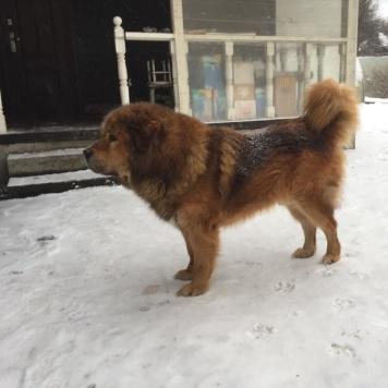 Гримм - Собаки в добрые руки