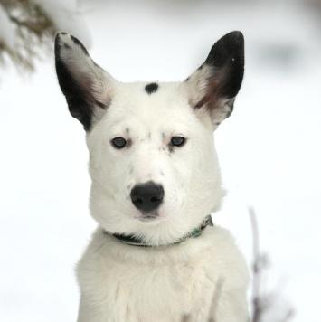 Красотка Гвен - Собаки в добрые руки