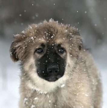 Йети - Собаки в добрые руки