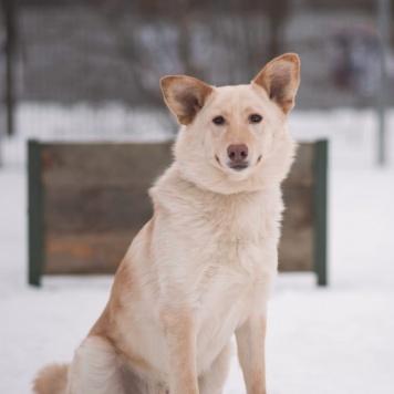 Сахарок - Собаки в добрые руки