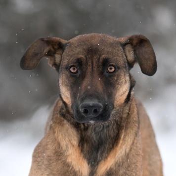 Прекрасная Арабика - Собаки в добрые руки