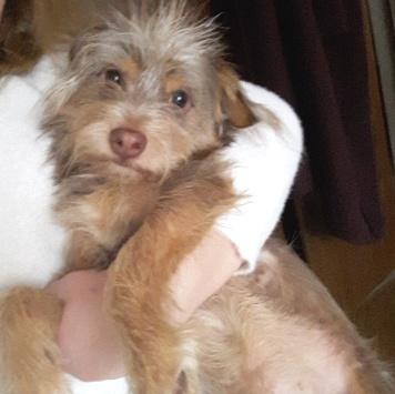 Леон - Собаки в добрые руки