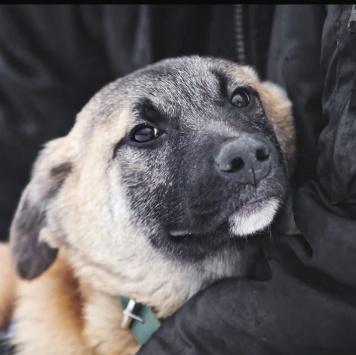 Бонд - Собаки в добрые руки