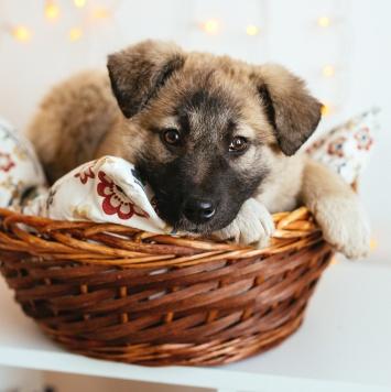 Хомячок - Собаки в добрые руки