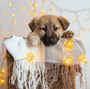 Кнопка - Собаки в добрые руки