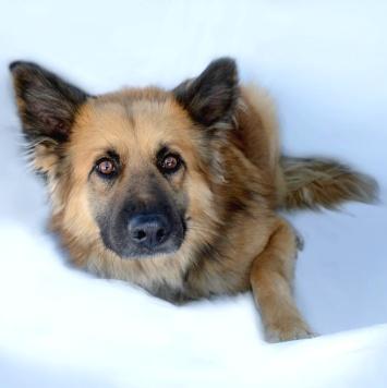 Юкос - Собаки в добрые руки