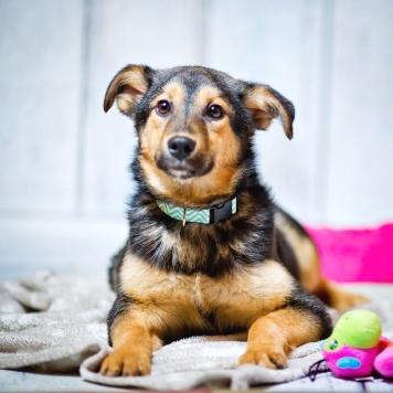 Бэмби - Собаки в добрые руки
