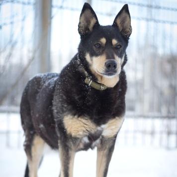 Тиана - Собаки в добрые руки