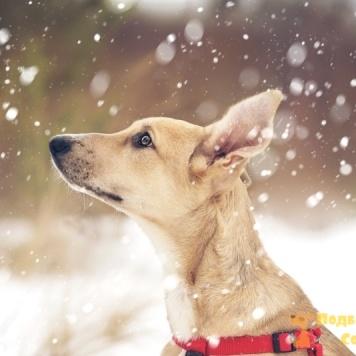 Лолита - Собаки в добрые руки