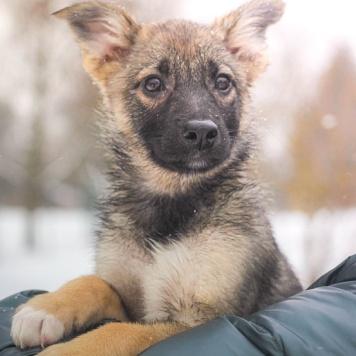 Элис - Собаки в добрые руки
