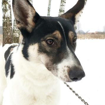 Бэла - Собаки в добрые руки