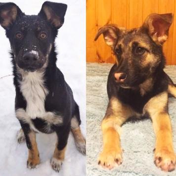 Гаечка и Рокки - Собаки в добрые руки