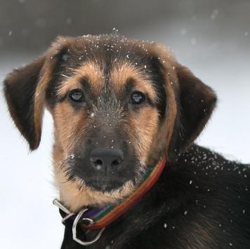 Бора - Собаки в добрые руки