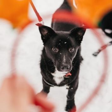 Тедди - Собаки в добрые руки