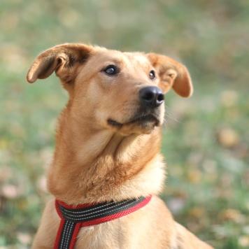 Семиона - Собаки в добрые руки