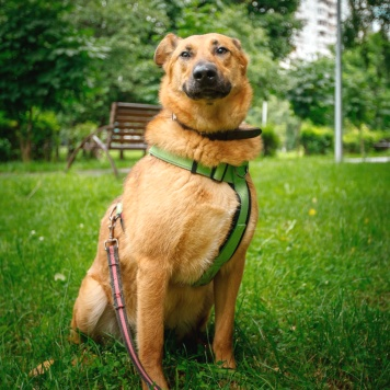 Кейси - Собаки в добрые руки