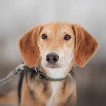 Задора - Собаки в добрые руки