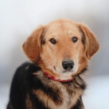 Комбо - Собаки в добрые руки