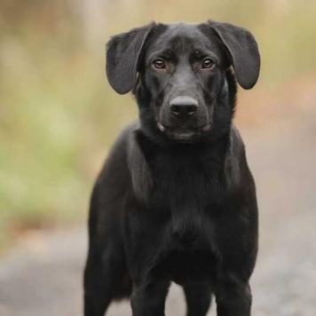 Камиль - Собаки в добрые руки