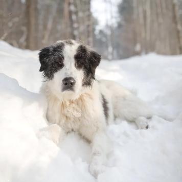 Жорик - Найденные собаки