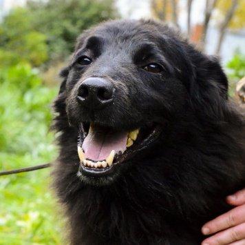 Кум - Собаки в добрые руки