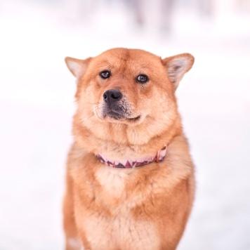 Хати - Собаки в добрые руки