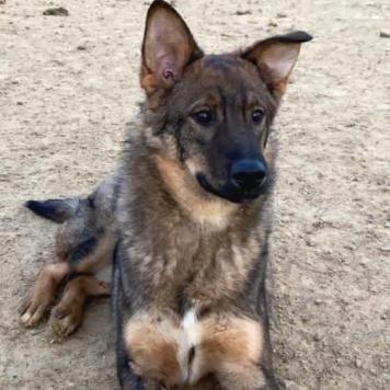 Пряник - Собаки в добрые руки