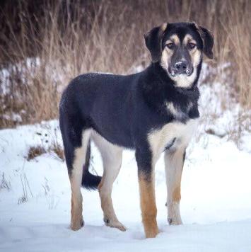 Доня - Собаки в добрые руки